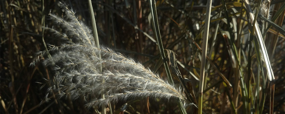 photo of grasses by Brenna Busse