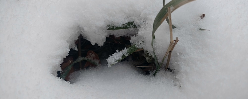 Hibernate. Photo by Brenna Busse