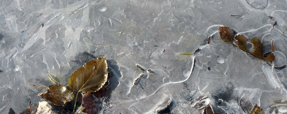 Leaves in ice by Brenna Busse